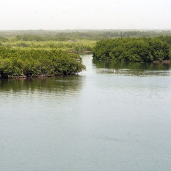 Bolong, mangrove