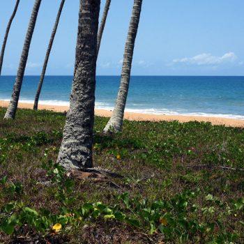 Cocotiers et plage, Sassandra