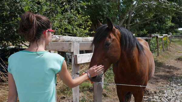 Terre Illich Hopineo chevaux