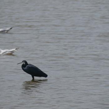 symbiosis, birds