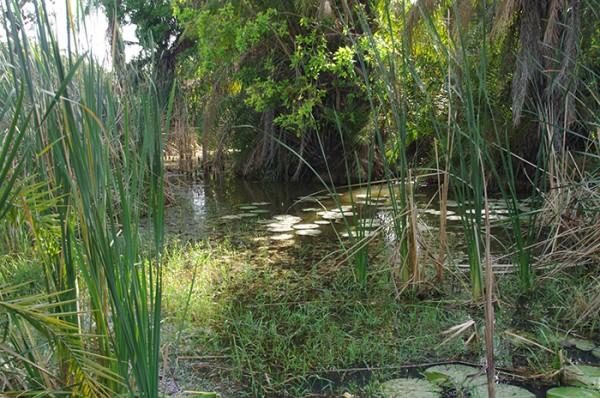 Trou d'eau douce, rare à Sandicoly